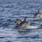 La Giornata Mondiale dei Delfini